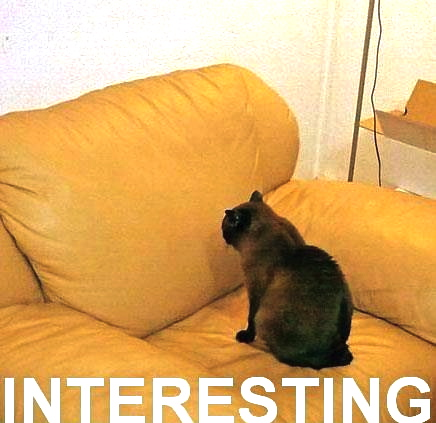 cat-interesting
